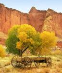 Lost Wagon