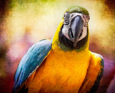 Macaw Jigsaw Puzzle