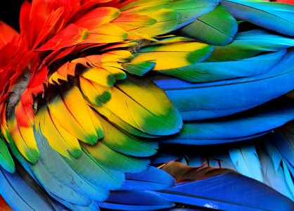 Macaw Feathers Jigsaw Puzzle