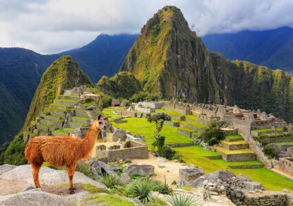 Machu Picchu Llama Jigsaw Puzzle