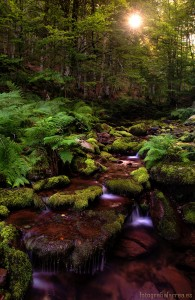 Maple Valley Stream Jigsaw Puzzle