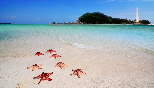 Marching Starfish Jigsaw Puzzle