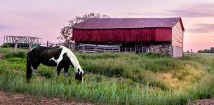 Maryland Horse