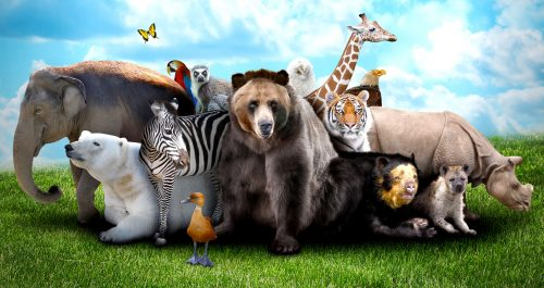 Menagerie Jigsaw Puzzle