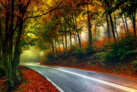Misty Autumn Road Jigsaw Puzzle