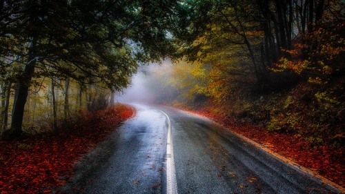 Misty Road Jigsaw Puzzle