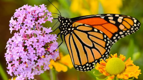 Monarch and Flower Jigsaw Puzzle