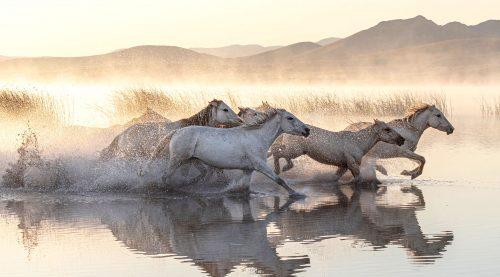 Mongolian Horses Jigsaw Puzzle