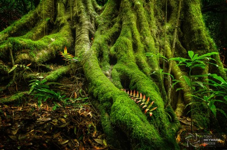Mossy Roots Jigsaw Puzzle