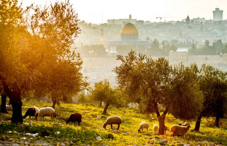 Mount of Olives Jigsaw Puzzle