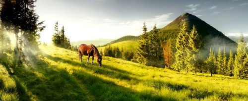 Mountain Pasture Jigsaw Puzzle