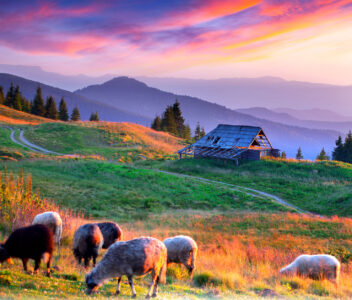 Mountain Sheep Jigsaw Puzzle