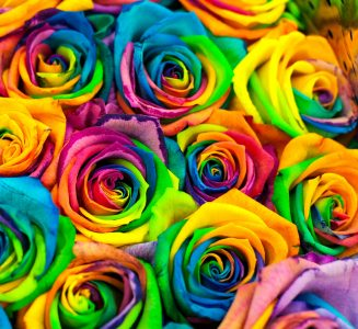 Multicolor Roses Jigsaw Puzzle