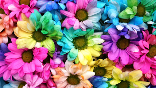 Multicolored Daisies Jigsaw Puzzle