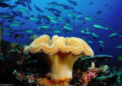 Mushroom Coral Jigsaw Puzzle