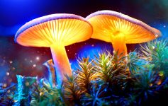 Mystical Mushrooms