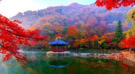 Naejangsan Park