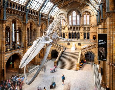 Natural History Museum Jigsaw Puzzle