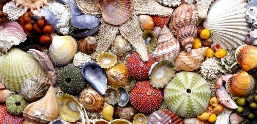 Norwegian Seashells Jigsaw Puzzle