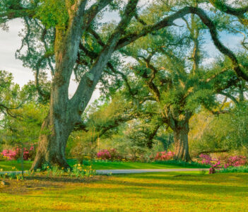 Oak Trail Jigsaw Puzzle