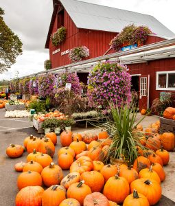 October Harvest Jigsaw Puzzle