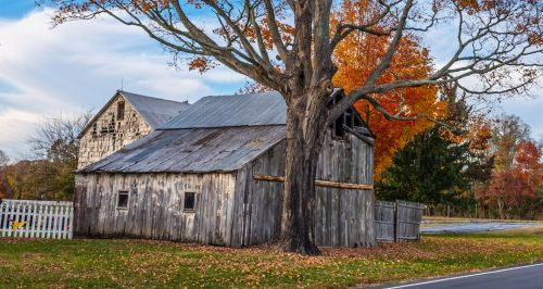 Old Gray Barn Jigsaw Puzzle
