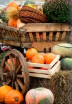 Old Pumpkin Wagon