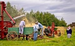 Old Time Harvest