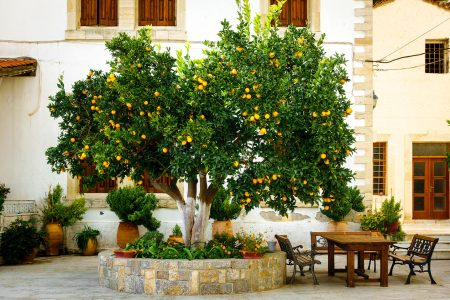 Orange Tree Patio Jigsaw Puzzle
