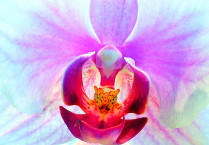 Orchid Close-Up Jigsaw Puzzle