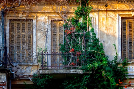 Overgrown Windows Jigsaw Puzzle
