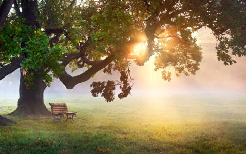 Park Bench Jigsaw Puzzle