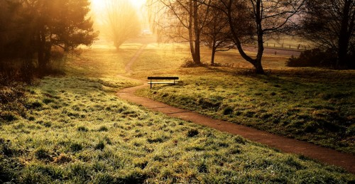 Path into the Light Jigsaw Puzzle