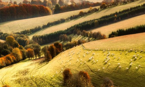 Peaceful Grazing Jigsaw Puzzle