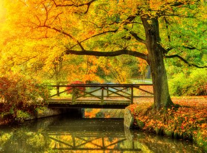 Peaceful Park Jigsaw Puzzle