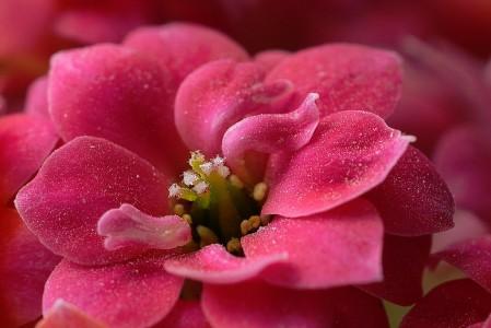 Peach Blossom Jigsaw Puzzle