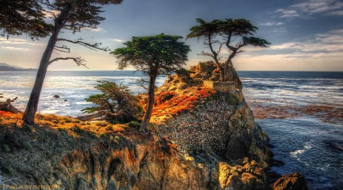 Pebble Beach Cypress Jigsaw Puzzle
