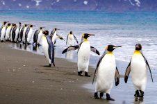 Penguin Stroll