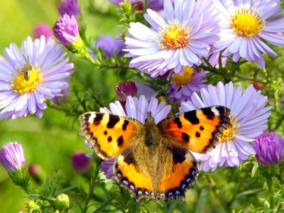 Perched Butterfly Jigsaw Puzzle