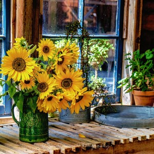 Picked Sunflowers Jigsaw Puzzle