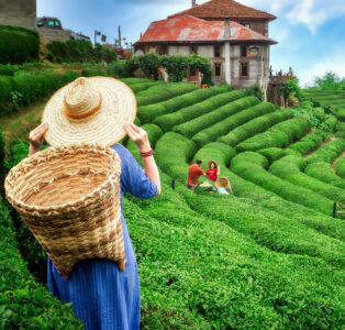 Picking Tea Leaves Jigsaw Puzzle