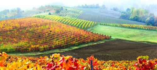 Piedmont Vineyards Jigsaw Puzzle