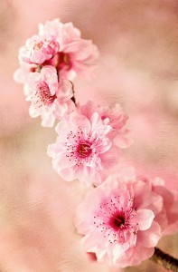 Pink Blossoms Jigsaw Puzzle