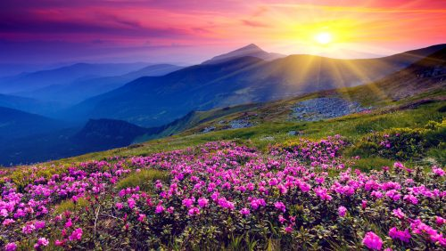 Pink Rhododendron Jigsaw Puzzle