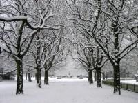 Poole Park Snow