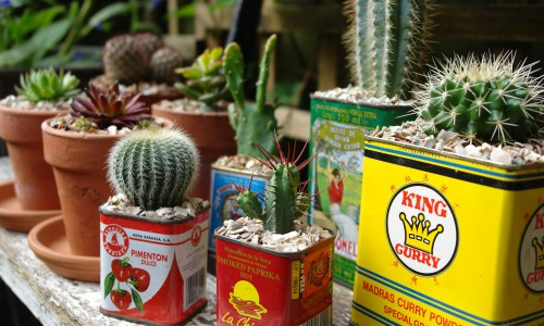 Potted Cacti Jigsaw Puzzle