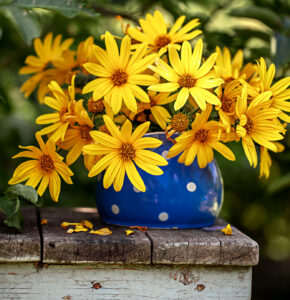Potted Chamomile Jigsaw Puzzle