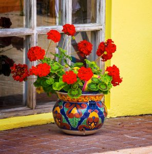 Potted Geraniums Jigsaw Puzzle