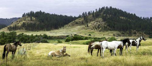 Prairie Horses  Jigsaw Puzzle