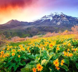 Provo Peak Wildflowers Jigsaw Puzzle